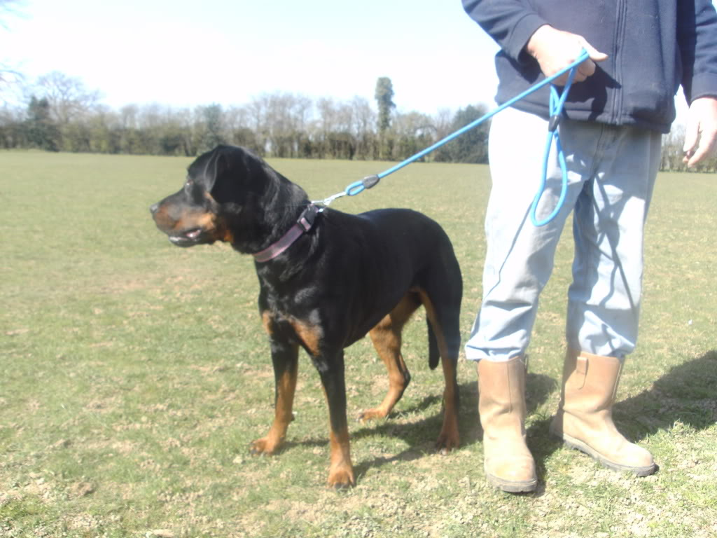 Bella - Rotti - HOMED PICT1353