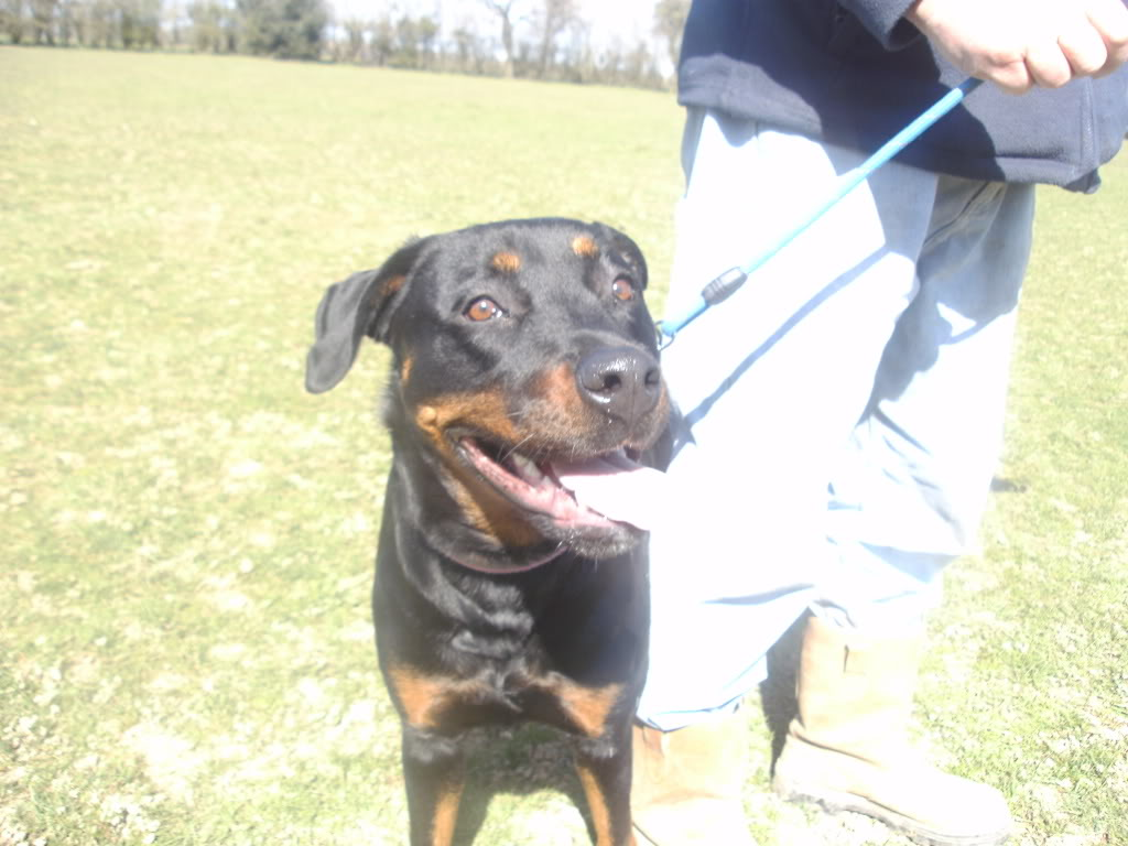 Bella - Rotti - HOMED PICT1357