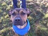 Bo - female - small cross breed - 8 months - KENT Th_2011-11-20101957