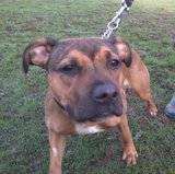 Bo - female - small cross breed - 8 months - KENT Th_2011-11-24131020
