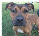 Bo - female - small cross breed - 8 months - KENT Th_2011-11-24131025-1
