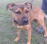 Bo - female - small cross breed - 8 months - KENT Th_PICT1308