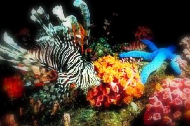 Podvodni cudesni svet UnderwaterEdit