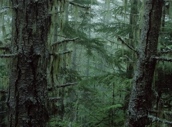 Diário de Campanha - PASSADO PARA O BLOG. Olympic-national-forest-2404