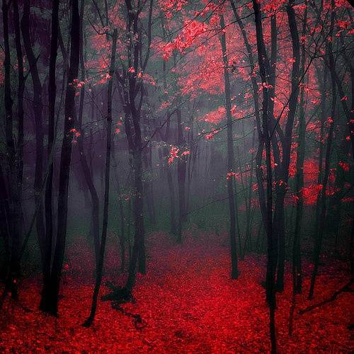 Red Wood Forest 17662623510041347_4gsR1U8n_c_zps8e0c3a4b