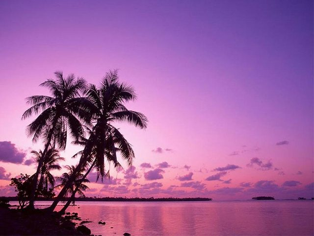 A la luz de la luna. Isla-palmeras_zps3f7d5551
