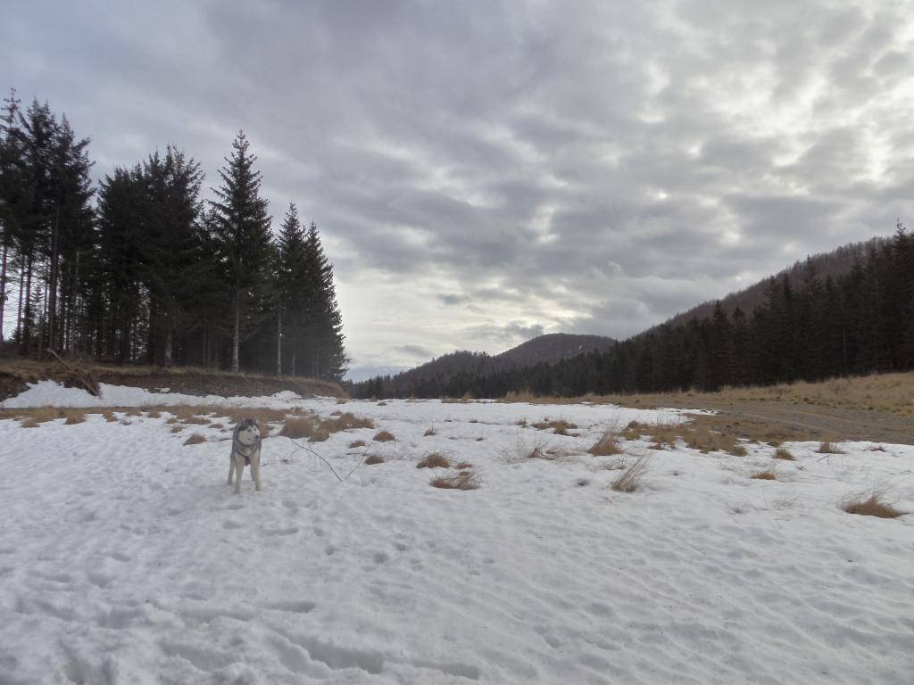 ZIMSKO DRUŽENJE - JANJČARICA 16-18.01.2015  - Page 3 SAM_2384_zpsa784a9e8