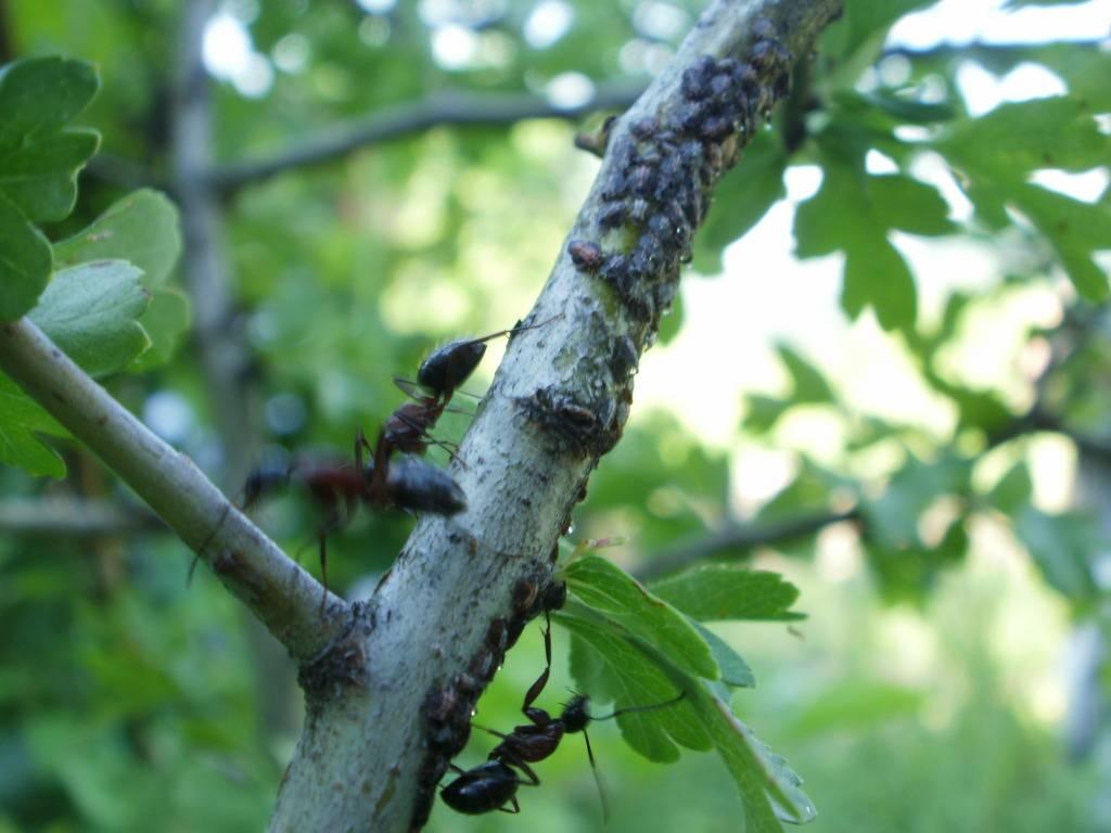 Slike insekata- buba - Page 3 P6060148
