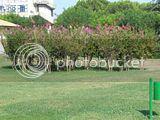 1° fiera di modellismo Centro Italia 1 e 2 Ottobre Chieti Th_DSCN6229