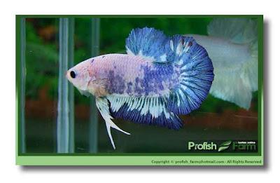 nuevas adquisiciones el 26 de marzo 2012 Hmpkmarmolprofishfarm