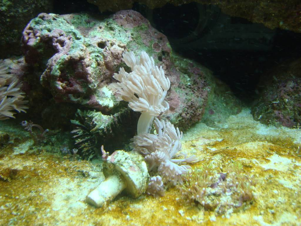 trade for soft corals?? DSC02601