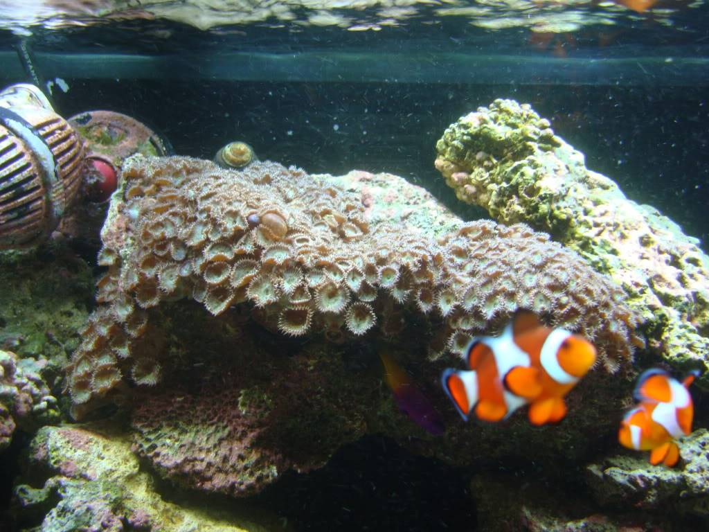 trade for soft corals?? DSC02604