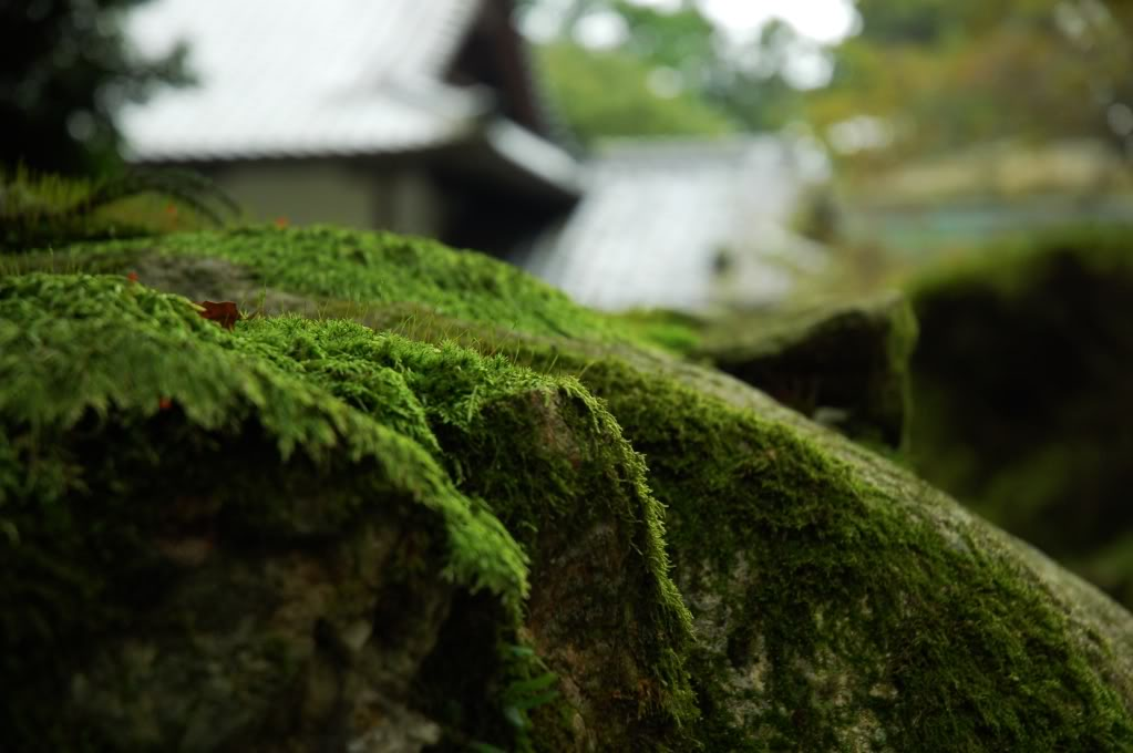 Share your pictures of Japan! ^o^ Fuwafuwa