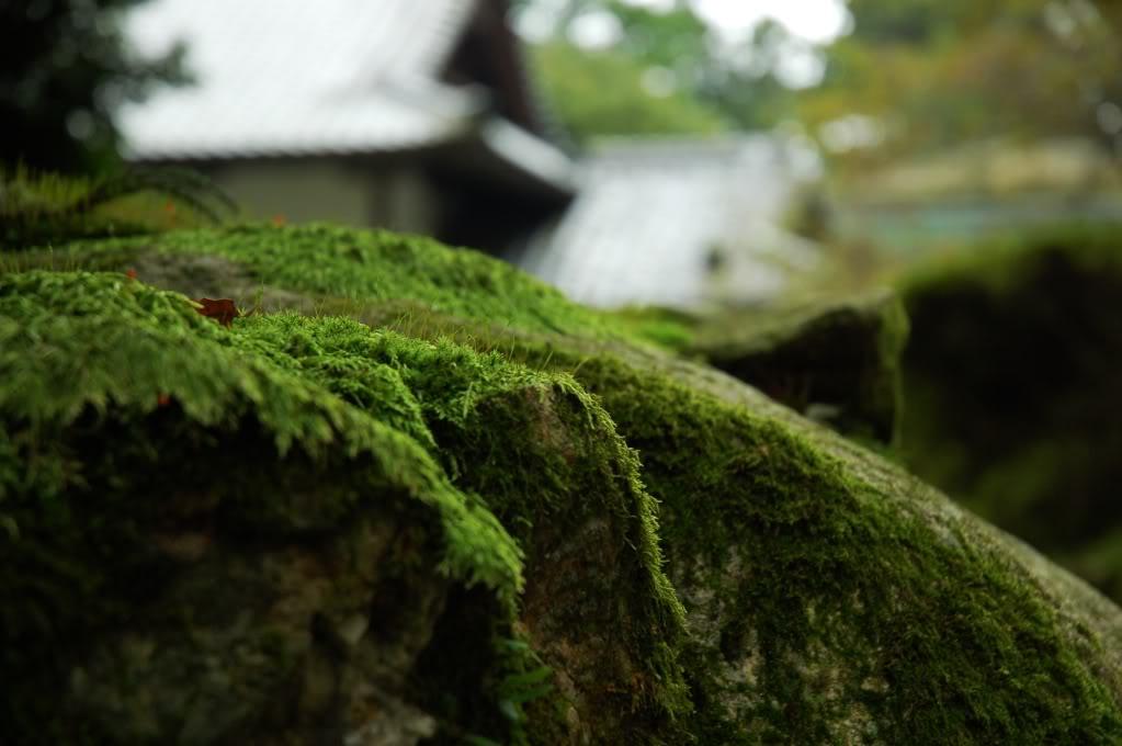Comparte tus fotos de Japón! ^o^ Fuwafuwa
