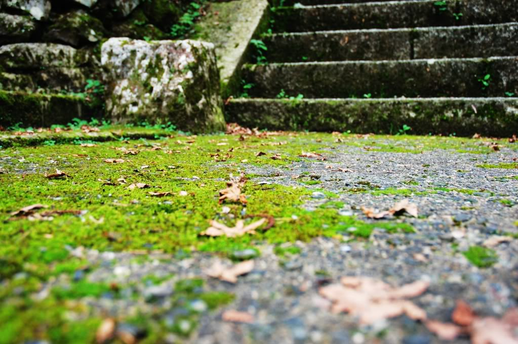 Comparte tus fotos de Japón! ^o^ Subarashii