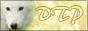 Dream Team Promotion, des services offerts rien que pour toi !