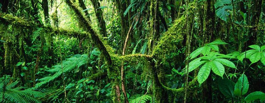 Découvrons la forêt interdite
