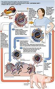 A(H1N1)  defined AntigenicShift_virus_flu