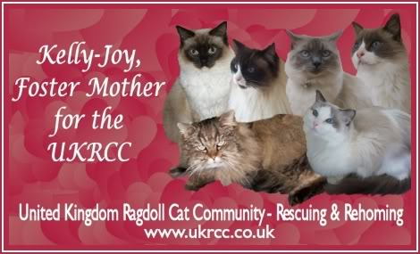 Urgently needed homes for many Ragdolls and other breeds of pedigree cats Kj