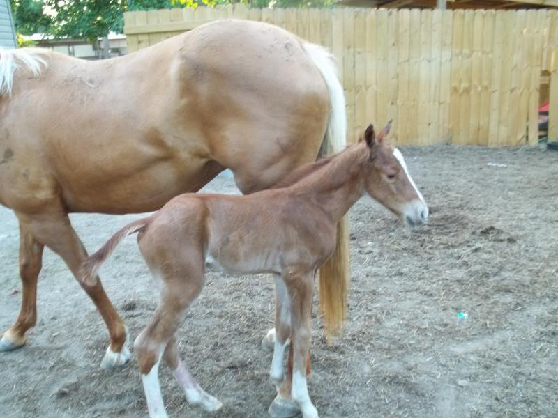 The colt was born!! Colt001