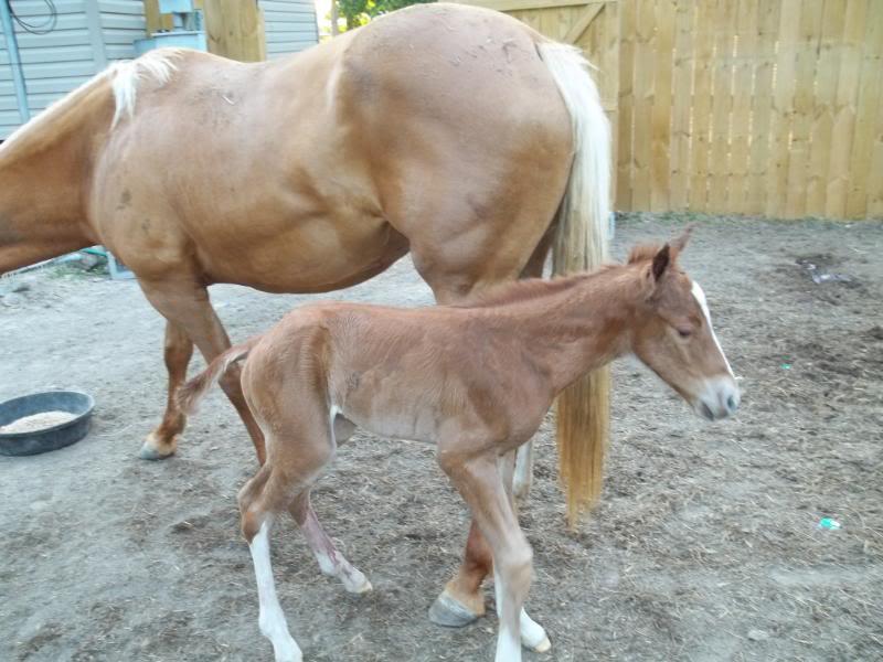 The colt was born!! Colt002