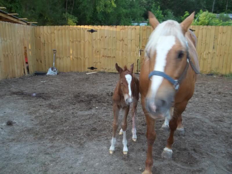 The colt was born!! Colt003