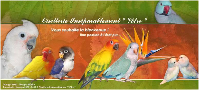 Partager avec nous votre passion pour les oiseaux - Portail* BANNIERE_OISEL