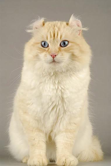 Ngắm những giống mèo kì lạ Meotaicupjpg-115427