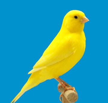 Identification of Yellow lipochrome ClearIntensiveYellow