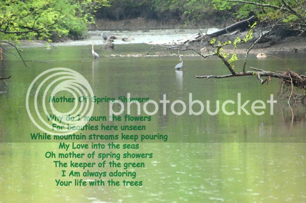 அழகிய மலர் காட்சிகள் (01) - Page 16 005dMotherOfSpringShowers