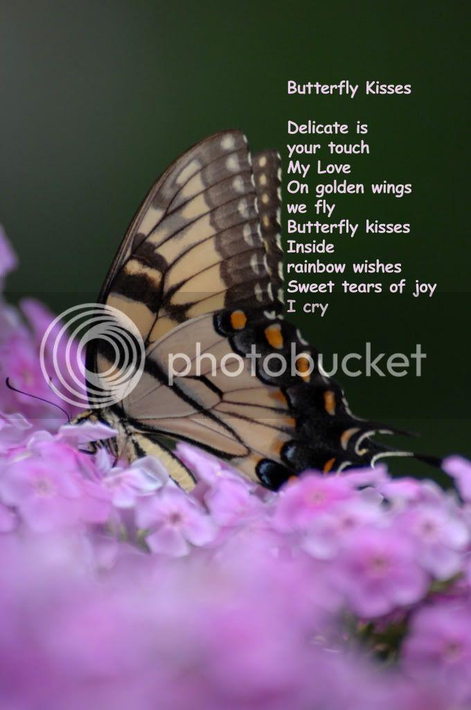 அழகிய மலர் காட்சிகள் (01) - Page 15 Butterflykissessiverbook2d