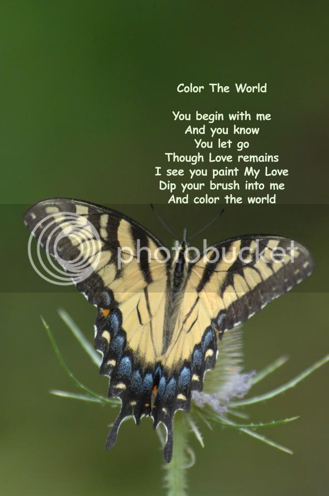 அழகிய மலர் காட்சிகள் (01) - Page 15 Colortheworld167slverbookd