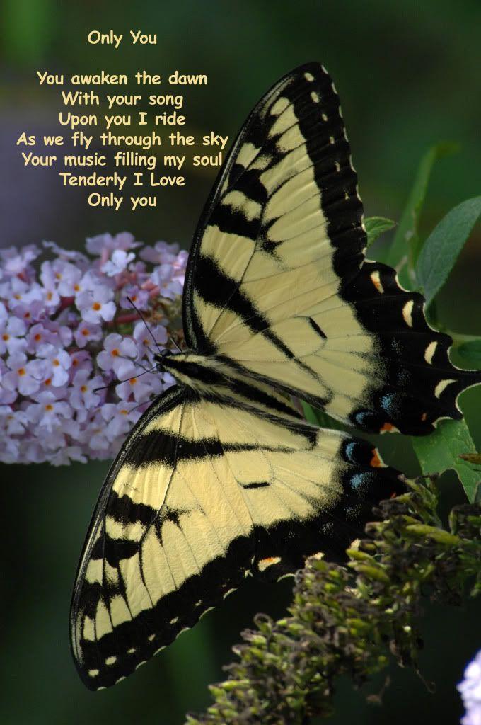 அழகிய மலர் காட்சிகள் (01) - Page 16 Onlyyou0078silverbookd