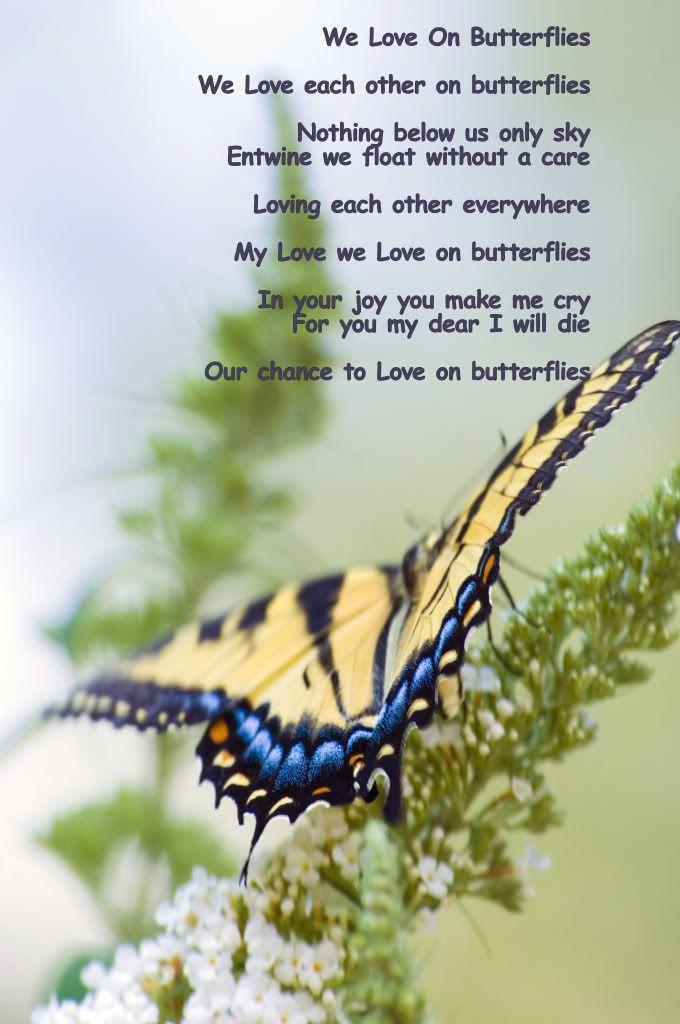 அழகிய மலர் காட்சிகள் (01) - Page 15 WeLoveOnButterflies