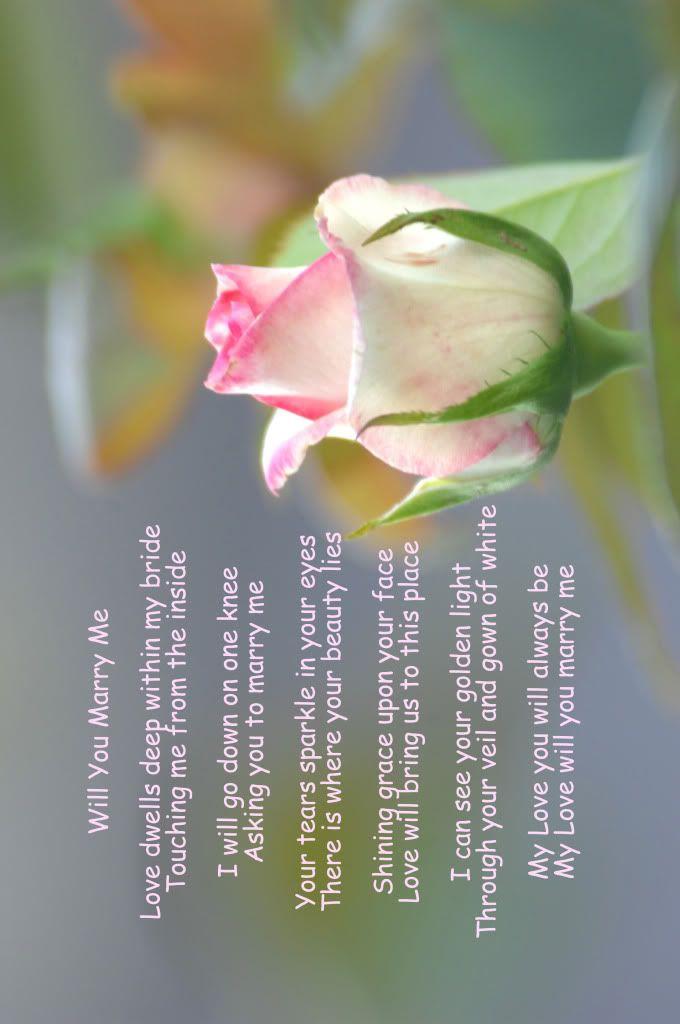 அழகிய மலர் காட்சிகள் (01) - Page 15 WillYouMarryMe