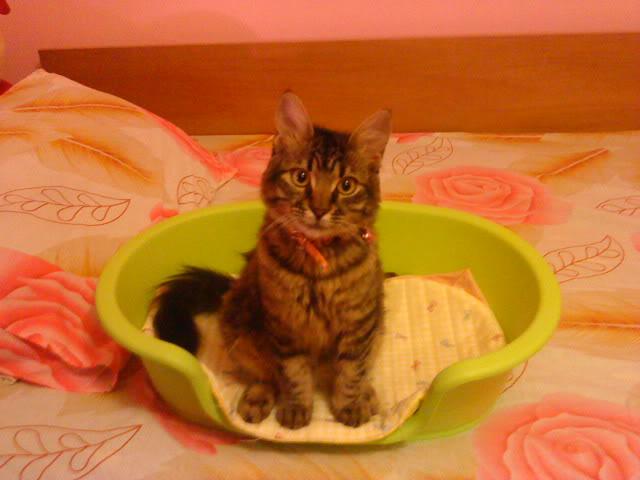Δινετε στις γατες σας κονσερβα?? DSC01720