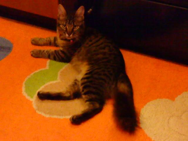 Δινετε στις γατες σας κονσερβα?? DSC01746