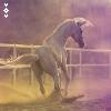 Ali's Bloog ;] Horses