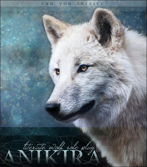 Anikira | Realistic Wolf Role Play Anikirabanner_zpsf1736168