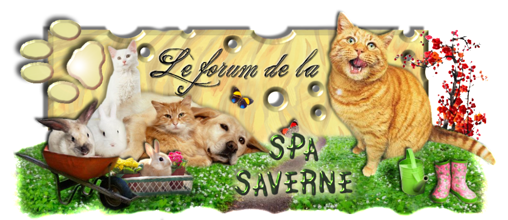 SPA SAVERNE