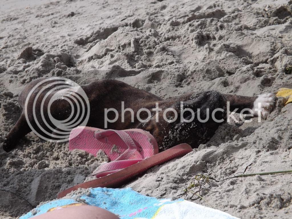 latest of dave(pic heavy) beach again.... 001_zpsa53a25e0