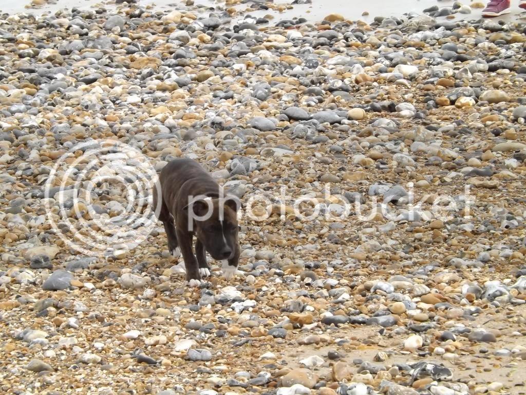 on the beach.... 002_zpsa752e4ab