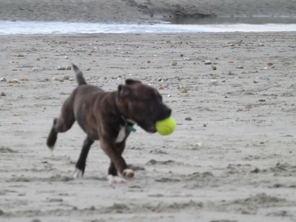 latest of dave(pic heavy) beach again.... 007_zpse20e4204
