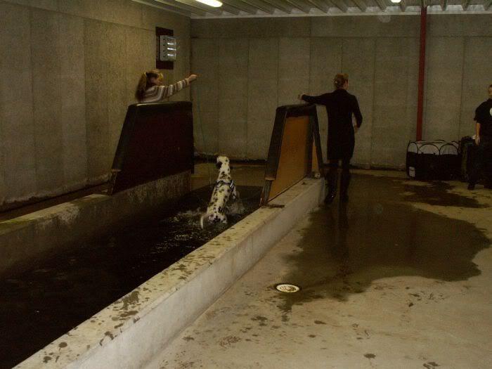 Hundesvømming på Holt Hestesenter! HH10