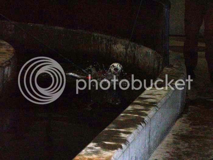 Hundesvømming på Holt Hestesenter! HH12