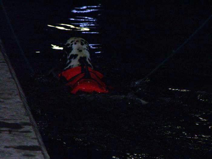 Hundesvømming på Holt Hestesenter! HH14