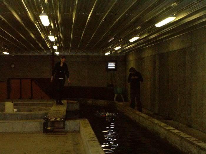 Hundesvømming på Holt Hestesenter! HH15
