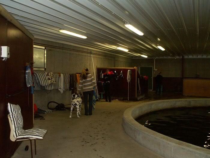 Hundesvømming på Holt Hestesenter! HH2