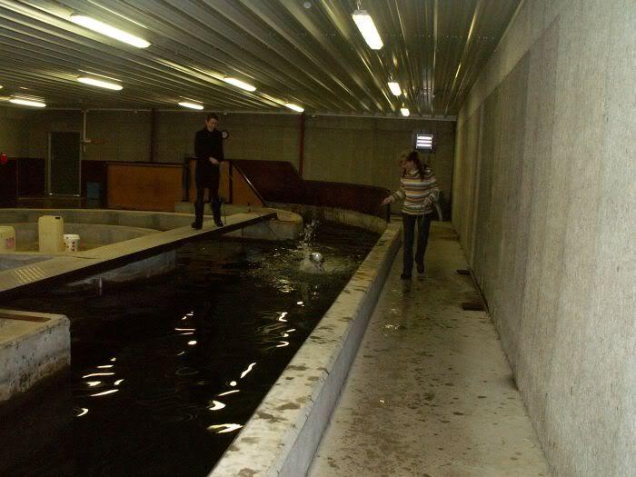 Hundesvømming på Holt Hestesenter! HH4