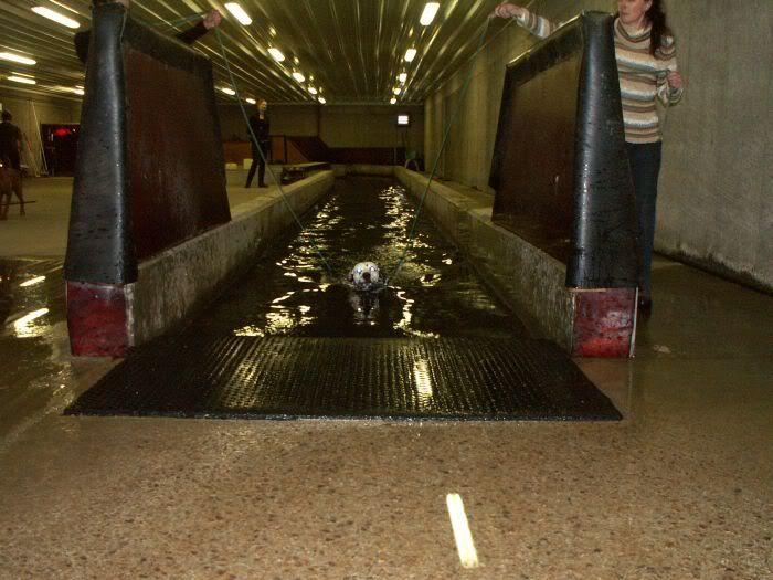 Hundesvømming på Holt Hestesenter! HH6